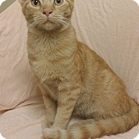 Adopt A Pet :: Mr. Butters - Cannelton, IN