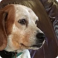 Adopt A Pet :: Bernie - Cleveland, OH