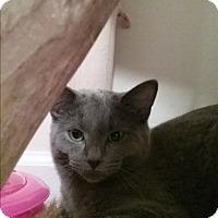Adopt A Pet :: Jajune - Cedar Springs, MI