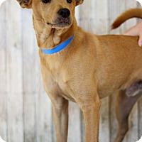 Adopt A Pet :: Kaden - Waldorf, MD