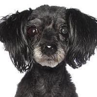 Adopt A Pet :: Julieta - Oakland Park, FL