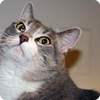 Adopt A Pet :: Maggie - Wildomar, CA