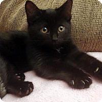 Adopt A Pet :: Sage - Chandler, AZ