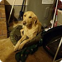 Adopt A Pet :: Goldie - Marietta, GA