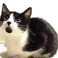 Adopt A Pet :: Ritz - Bear, DE