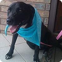 Adopt A Pet :: Sidney - SWEET GIRL - Seattle, WA