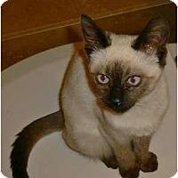 Adopt A Pet :: Machi - Brea, CA