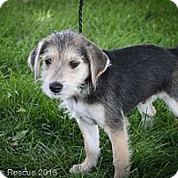 Adopt A Pet :: Periwinkle - Broomfield, CO