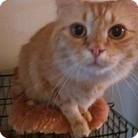 Adopt A Pet :: Copper - Walla Walla, WA