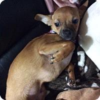 Adopt A Pet :: Rusty - S. Pasedena, FL