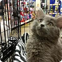 Adopt A Pet :: Nyla - McDonough, GA