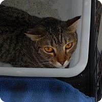 Adopt A Pet :: Athena - Morgan Hill, CA