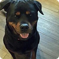 Adopt A Pet :: Chloe - White Hall, AR