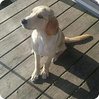 Adopt A Pet :: Pup Mickey - Adoption pending - Rockville, MD