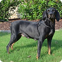 Adopt A Pet :: Mrs. Brisby - Atlanta, GA