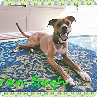 Adopt A Pet :: Van Gogh - Garden City, MI