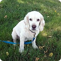 Adopt A Pet :: Rocky 16-100 - Parker, CO
