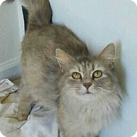 Adopt A Pet :: Barn CATS - Virginia Beach, VA
