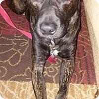 Adopt A Pet :: Tuck - Normandy, TN