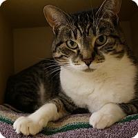 Adopt A Pet :: Missy - Salem, NH