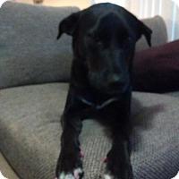 Adopt A Pet :: Georgie 1 - San Diego, CA