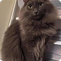 Adopt A Pet :: Zeke - Sharon Center, OH
