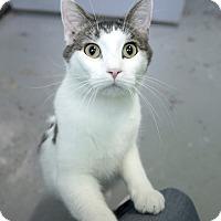 Adopt A Pet :: Phil - Schererville, IN