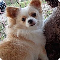 Adopt A Pet :: amora - Crump, TN