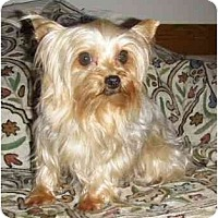 Adopt A Pet :: Lulu - Mooy, AL