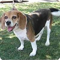 Adopt A Pet :: Auckie - Phoenix, AZ
