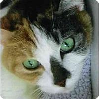 Adopt A Pet :: Hollie - Brea, CA