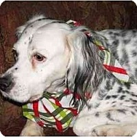 Adopt A Pet :: Trapeze - Columbus, OH