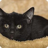 Adopt A Pet :: Beyoncé Knowles - Lombard, IL