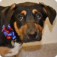Adopt A Pet :: Brunner - Gilbert, AZ