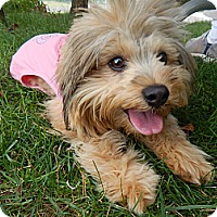 Adopt A Pet :: Tink - West Deptford, NJ