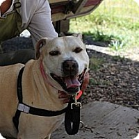 Adopt A Pet :: Fawn - Eugene, OR