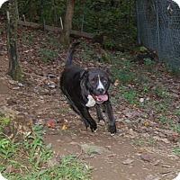 Adopt A Pet :: Betty - Hazard, KY