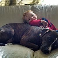 Adopt A Pet :: Harper - Winchester, VA