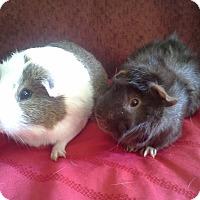 Adopt A Pet :: Chewy - San Antonio, TX