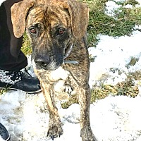 Adopt A Pet :: #565-14  RESCUED! - Zanesville, OH