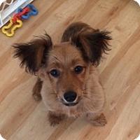 Adopt A Pet :: KOBI - Portland, OR