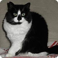 Adopt A Pet :: Rosa - Verdun, QC