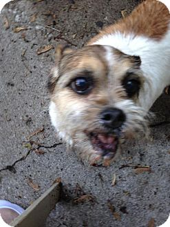 Terrier (Unknown Type, Medium) Mix Dog for adoption in Fishers, Indiana - Jenni