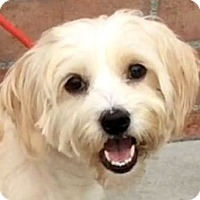 Adopt A Pet :: SHERRY (video) - Los Angeles, CA