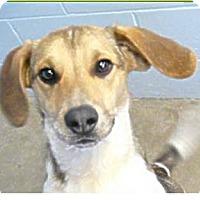 Adopt A Pet :: Fez - Springdale, AR