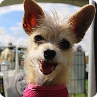 Adopt A Pet :: Junebug - Henderson, NV
