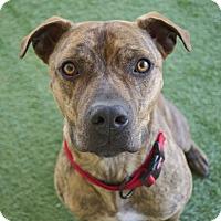 Adopt A Pet :: Modelo - Santa Barbara, CA