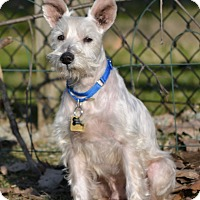 Adopt A Pet :: Clyde~ADOPTION PENDING - Sharonville, OH