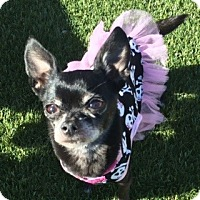 Adopt A Pet :: Mitzie - Las Vegas, NV