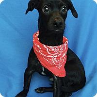 Adopt A Pet :: Driver - Irvine, CA